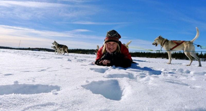 mariella scandinavia husky