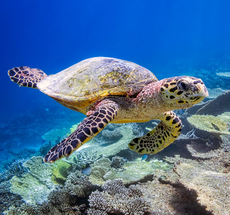 Maldives with teens turtle
