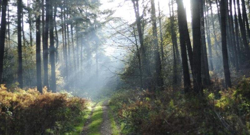 Sherwood Forest Nottingham Camping