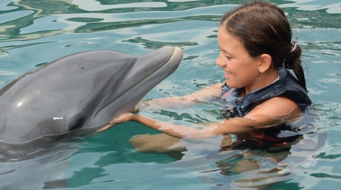 little-girl-with-dolphin-bermuda