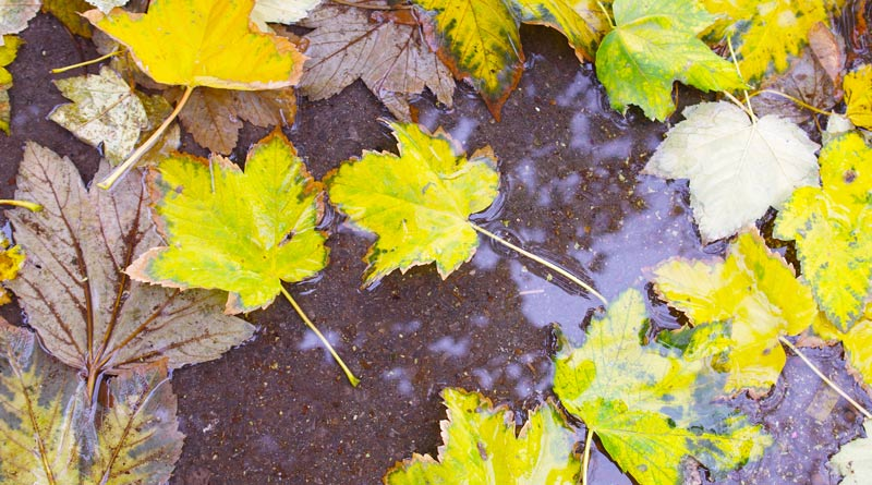 wet-leaves-in-england