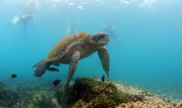 snorkelling in the Galapaos on a family holiday
