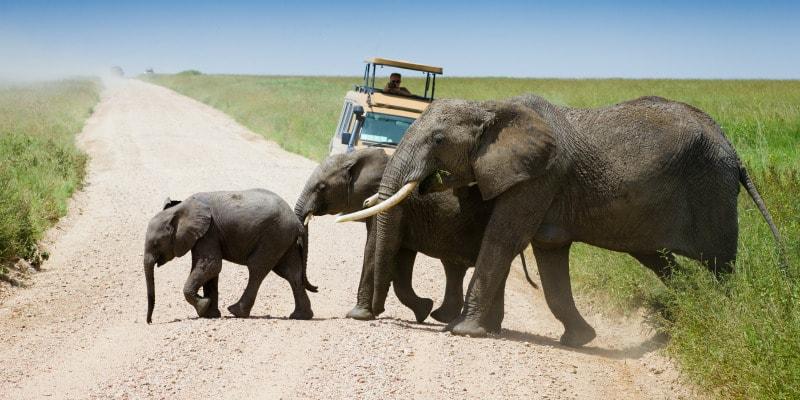 Elephants-Safari