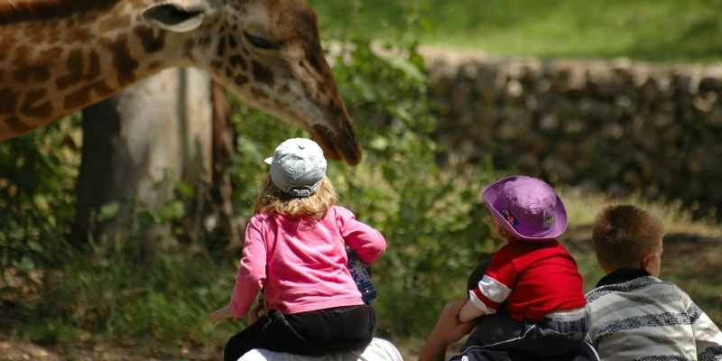 Family watching giraffe at zoo