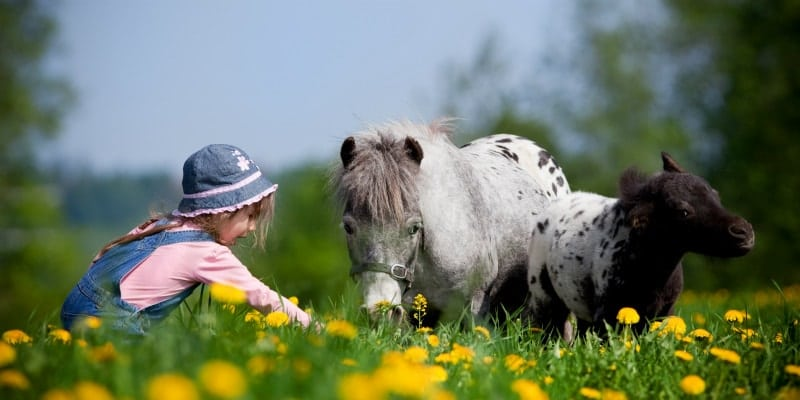 girl with animals in a field