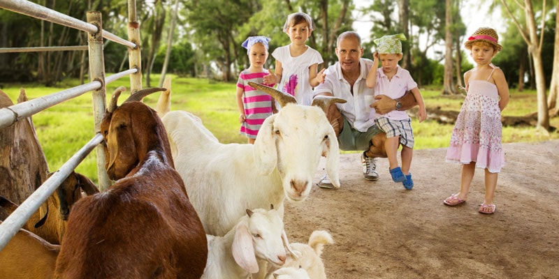 Family-and-goats-denis-island-seychelles