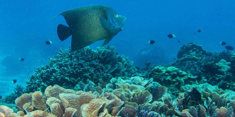 fish-in-coral-reef-seychelles