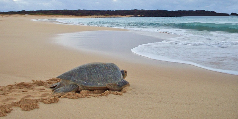 costa-rica_turtle-sea