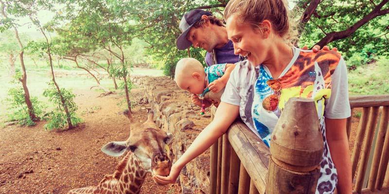 family-feed-giraffe-mauritius