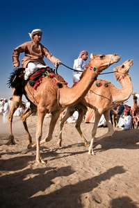 camel-race-oman