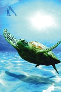 turtle-swimming-under-water-oman