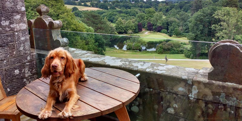 dog-barney-on-balcopny-at-bovey-castle-dartmoor