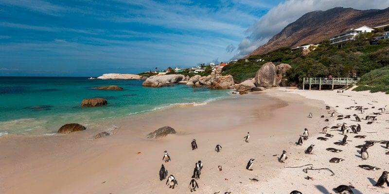 boulders-beach-penguins