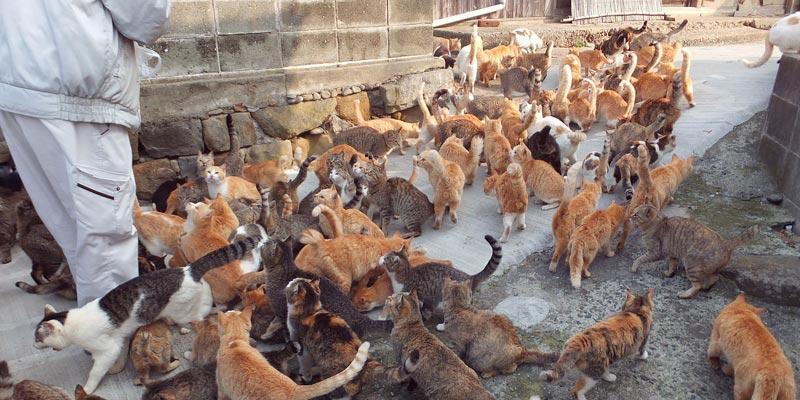 Cats_on_aoshima_island japan