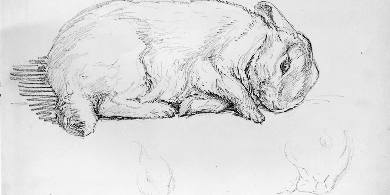 ;A-Beatrix_Potter_Study_of_Potters_rabbit_Peter_Piper_14_February_1899_c_Frederick_Warne__Co