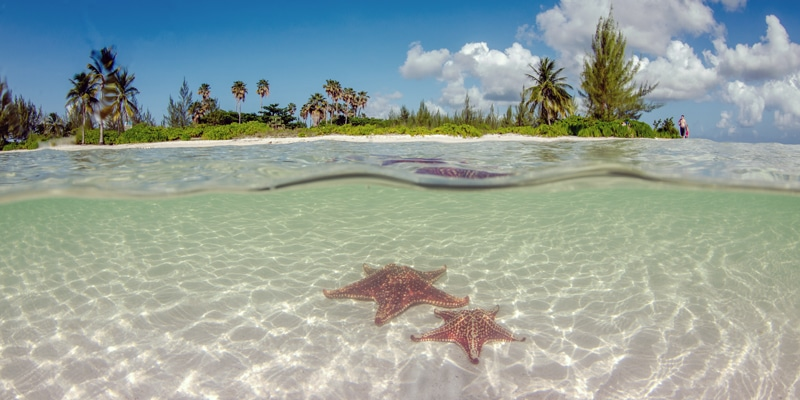 Grand-Cayman-Starfish-Point-Shutterstock