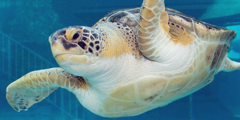 Mote-Marine-Aquarium.-Credit-Courtesy-of-VisitSarasota.com