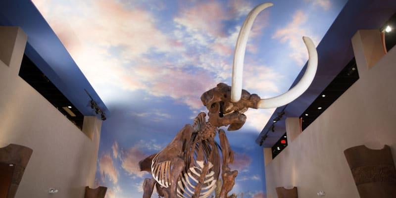 Bradenton_South_Florida_Museum