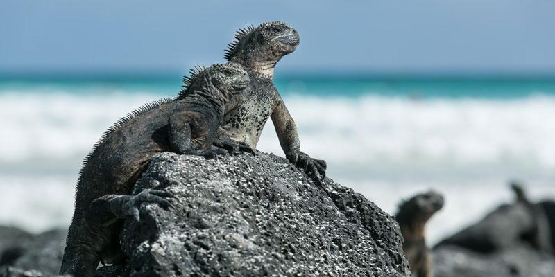 galapagos-beach-tortuga-bay-ecuador