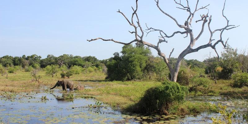 sri-lanka-Elephant-at-Yala-National-Park