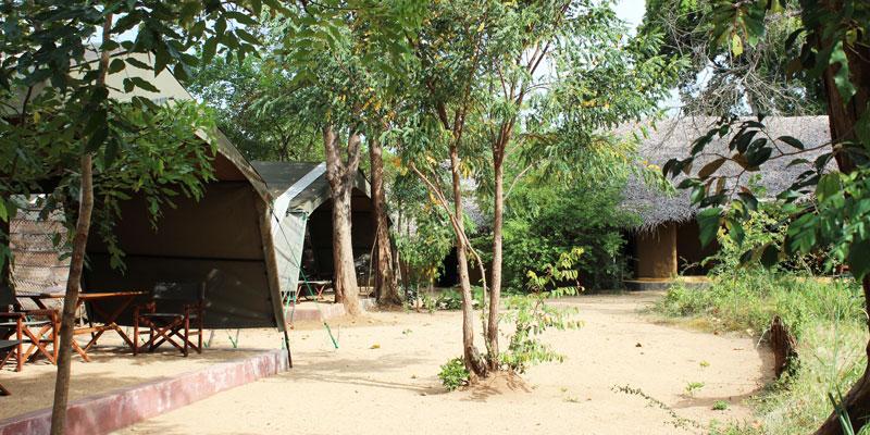 sri-lanka-Treetops-Jungle-Lodge