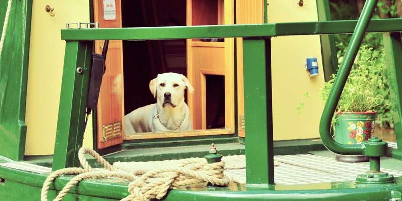 dog-on-narrowboat-less-saturation