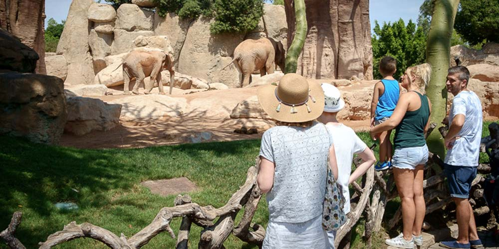 Valencia Bioparc Zoo Spain