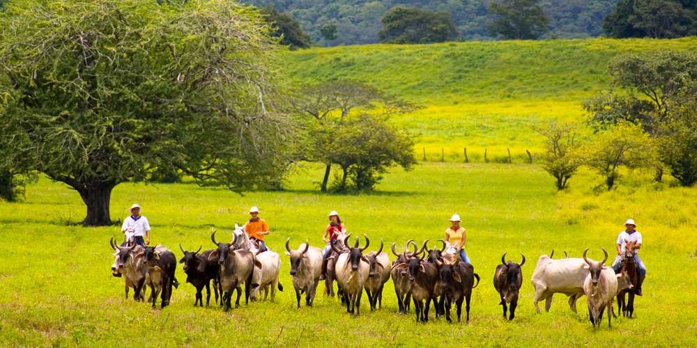 cowboys costa rica family holidays