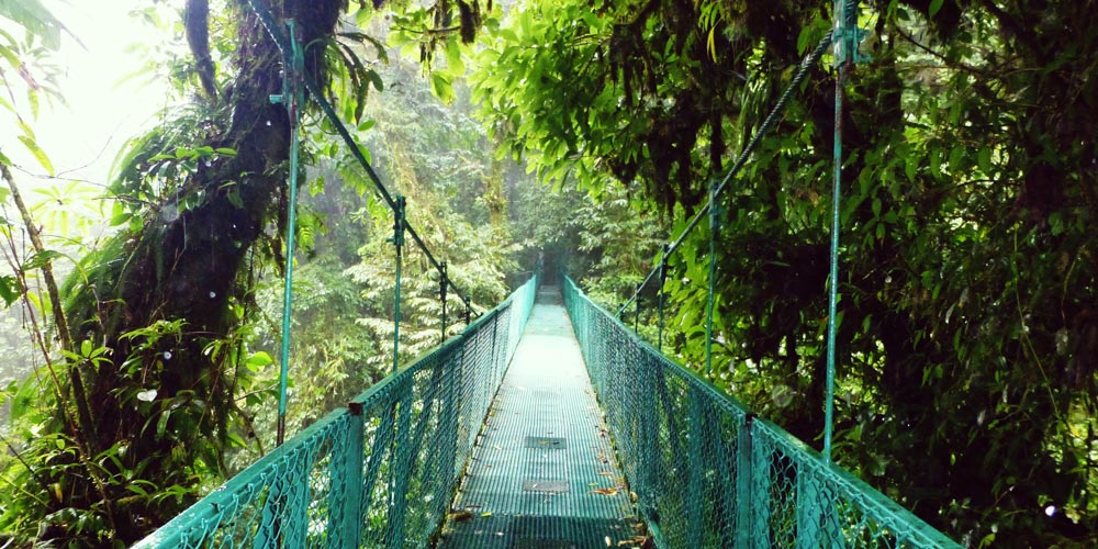 cloud forest costa rica experiences
