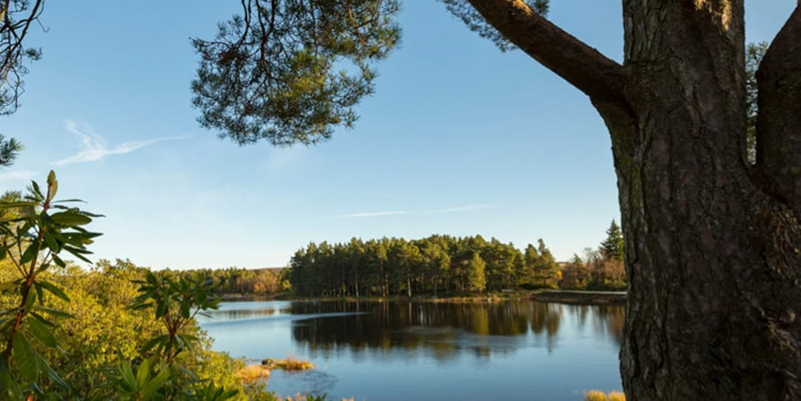 Cragside 10 National Trust family days out worth a road trip with kids