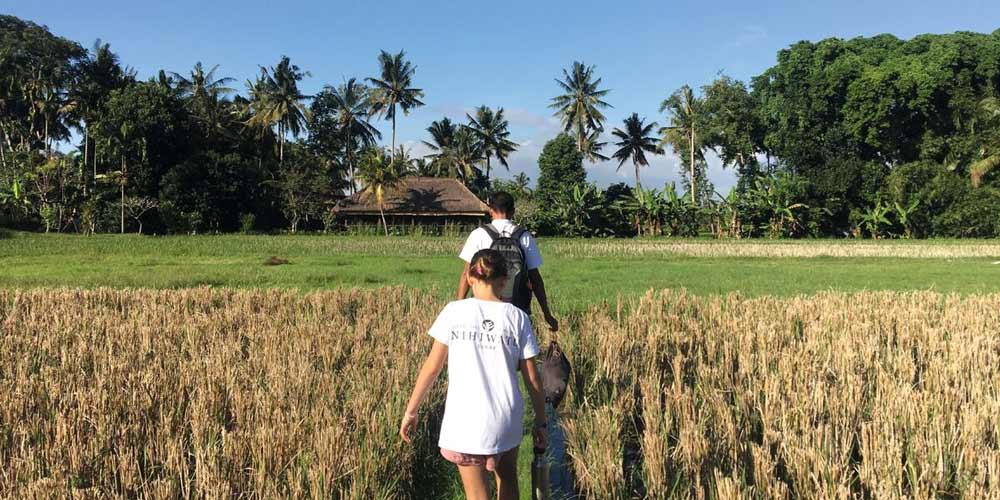 walking through rice fields - Bali's alternative Green School