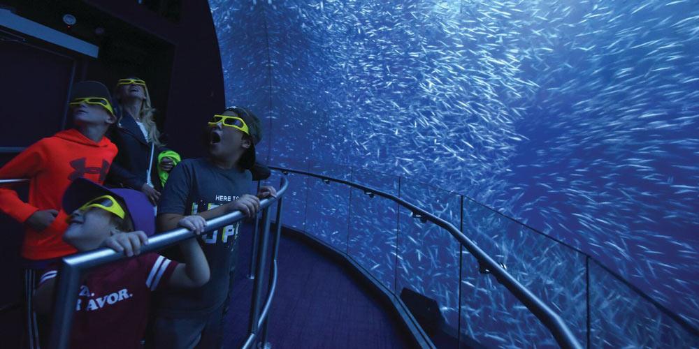 Family aquarium with 3D glasses 72 hours in manhattan