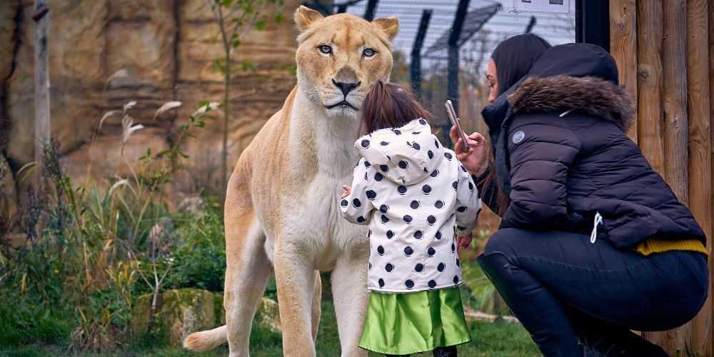 Paradise Wildlife Park child watching lions