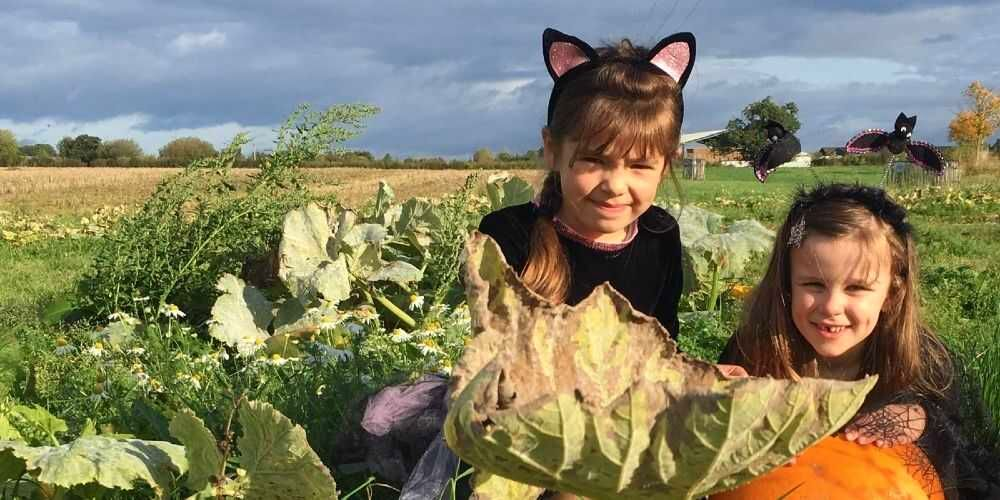 Pick Your Own Pumpkins Lower Drayton Farm October family events 2021