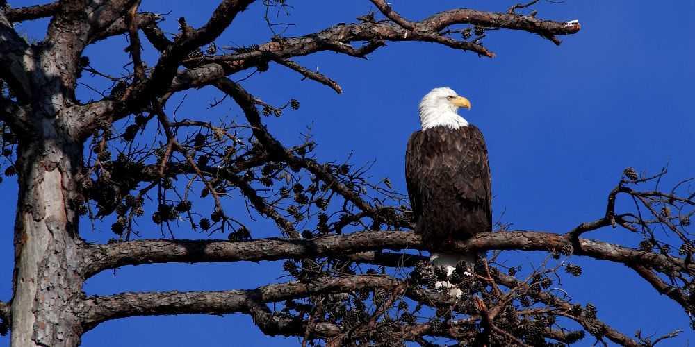 Arkansas family road trip Lake Ouachita State Park eagle Arkansas