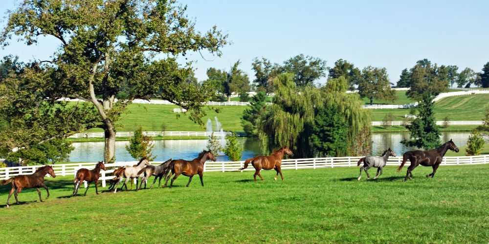 Kentucky family road trip Horse Farms Donamire Farm Horses Running